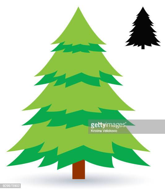 illustrations, cliparts, dessins animés et icônes de pin tree  - sapin