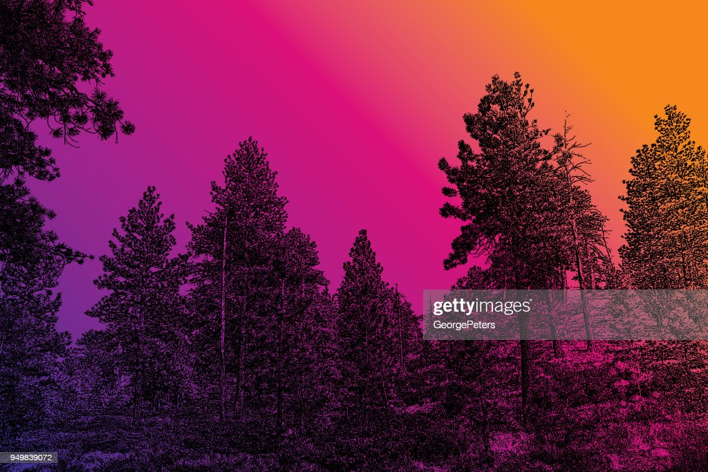 Pine trees at Bryce Canyon National Park : stock illustration