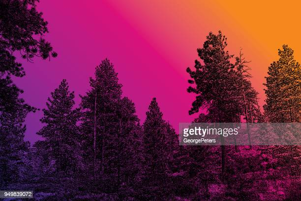 pine trees at bryce canyon national park - ponderosa pine tree stock illustrations, clip art, cartoons, & icons