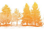 Pine trees engraving