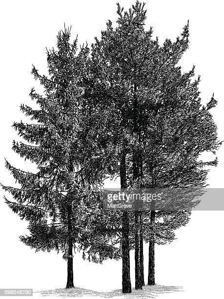 Trees de pinos