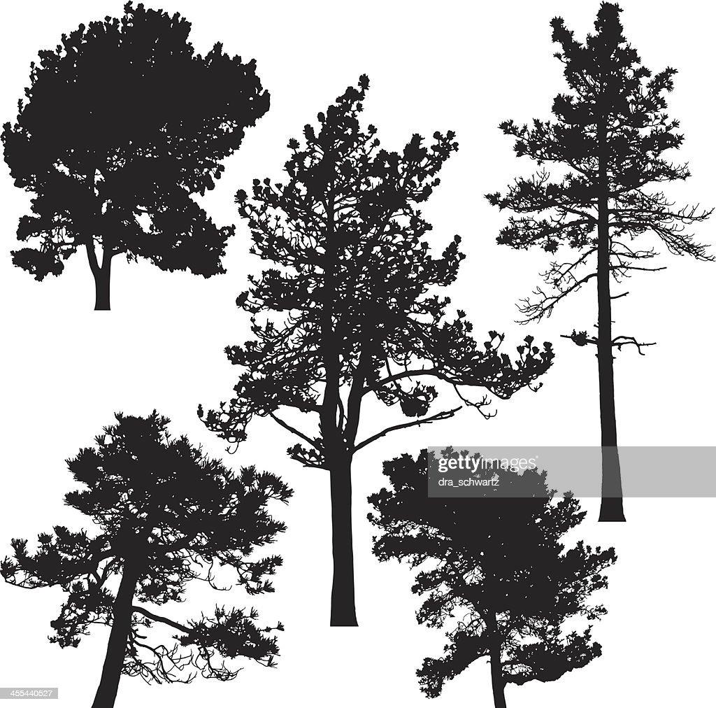 Vector Illustration Tree: Pine Trees Vector Vector Art