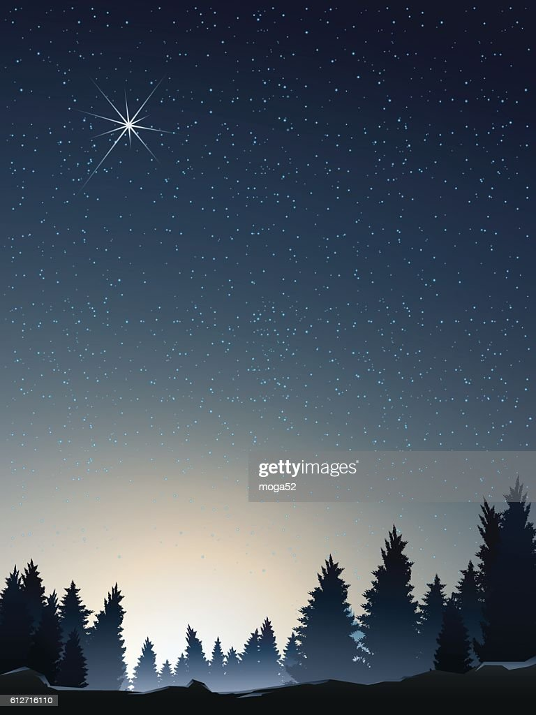 pine wood perspective when sunrise with star