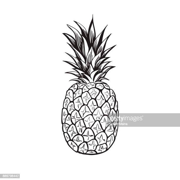pineapple - vector - juicy stock illustrations, clip art, cartoons, & icons