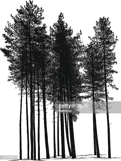 pines - pine wood material stock illustrations, clip art, cartoons, & icons