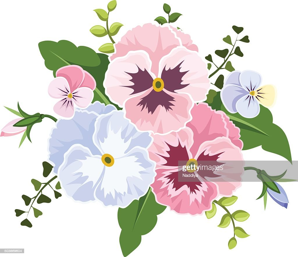 Pink and blue pansy flowers. Vector illustration.