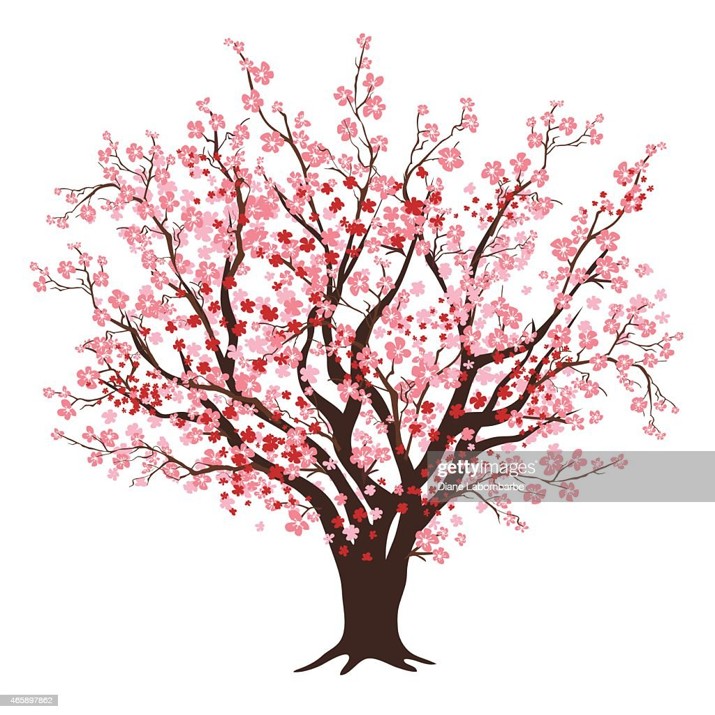Pink And Red Cherry Blossom Tree In Full Bloom : stock illustration