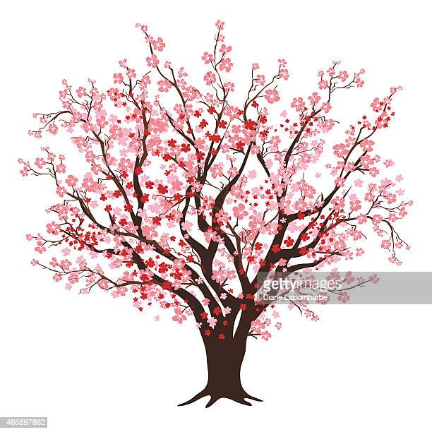 stockillustraties, clipart, cartoons en iconen met pink and red cherry blossom tree in full bloom - bloesem