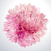Pink Asters and Chrysanthemums sphere