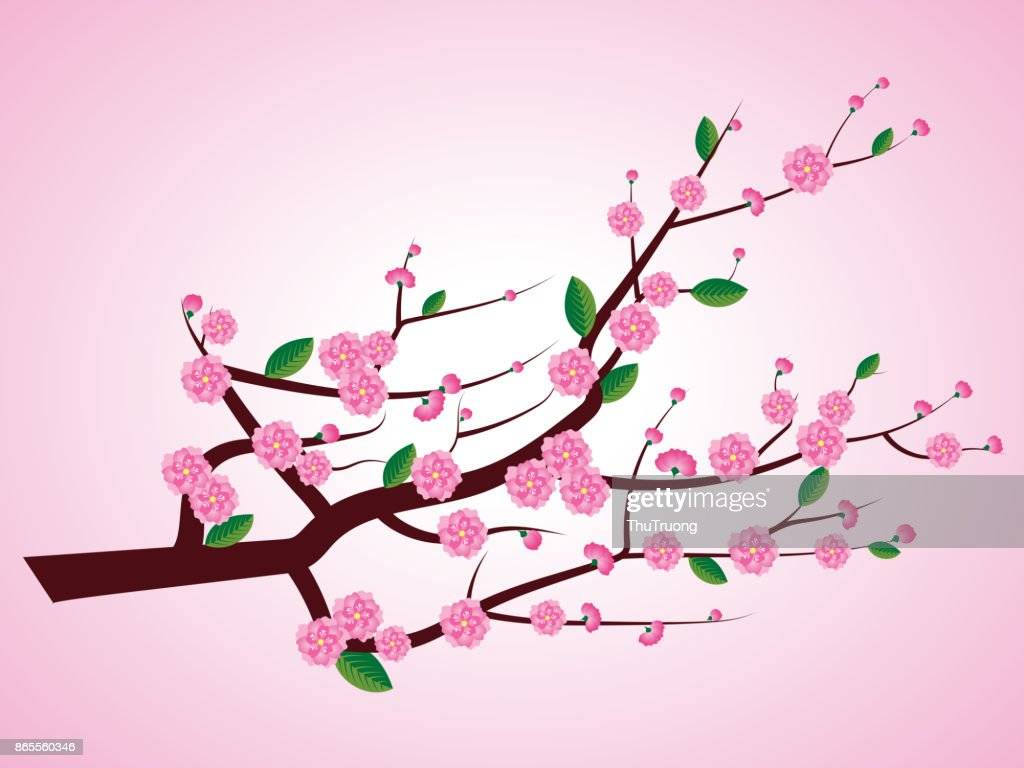 Pink blossoms on branches - vector