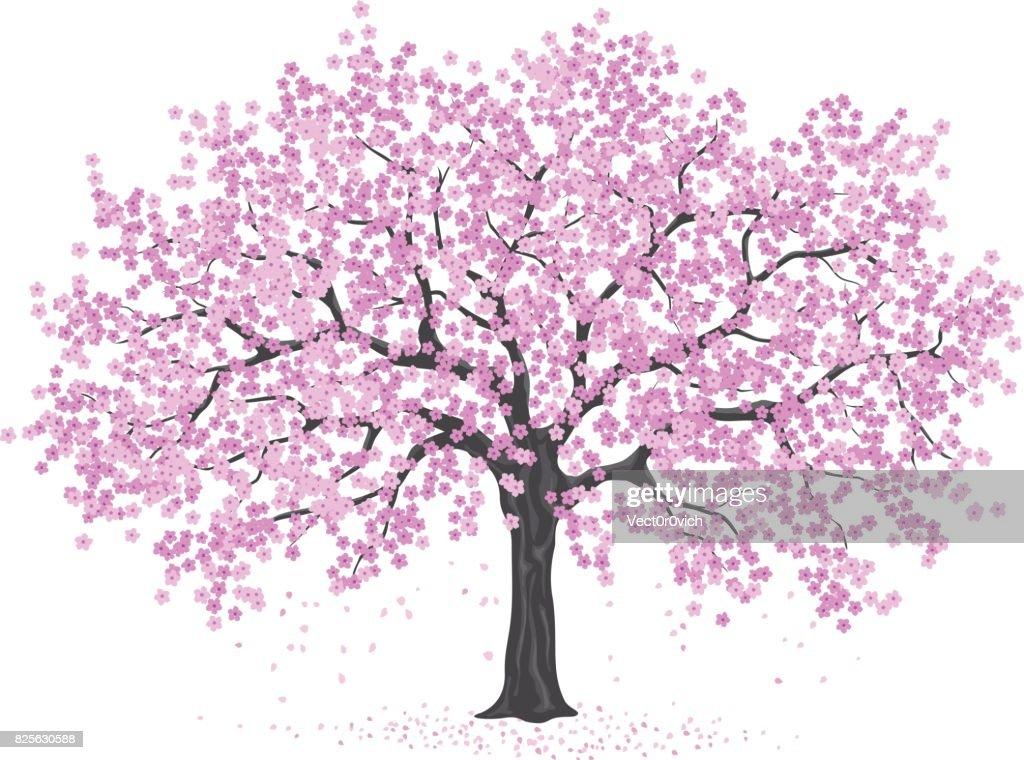 pink cherry blossom tree, sakura