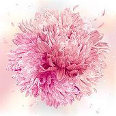 Pink Chrysanthemums sphere