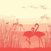 Pink Flamingos in the wild