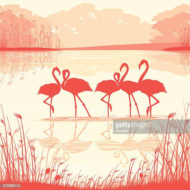 pink flamingos in the wild - flamingo stock illustrations, clip art, cartoons, & icons