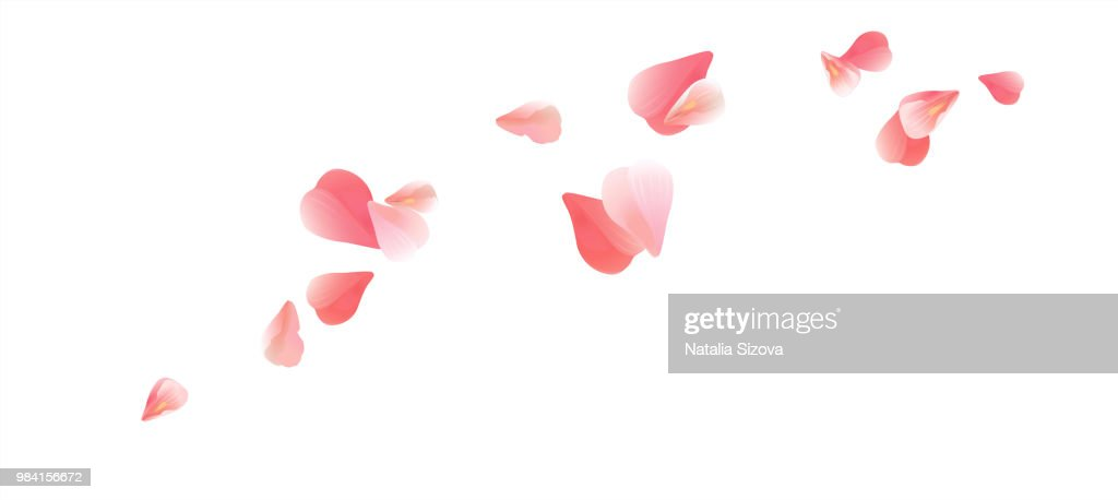 Pink flying petals isolated on White background. Petals in the form of heart. Vector