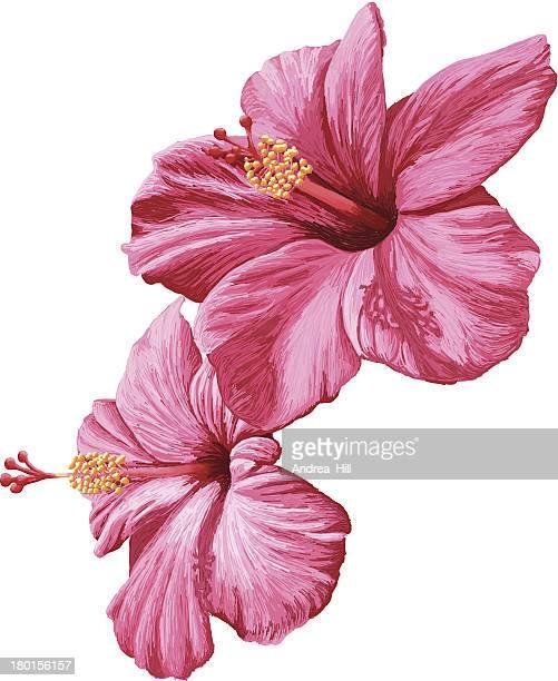 Illustrations et dessins anim s de fleur tropicale getty - Dessin d hibiscus ...