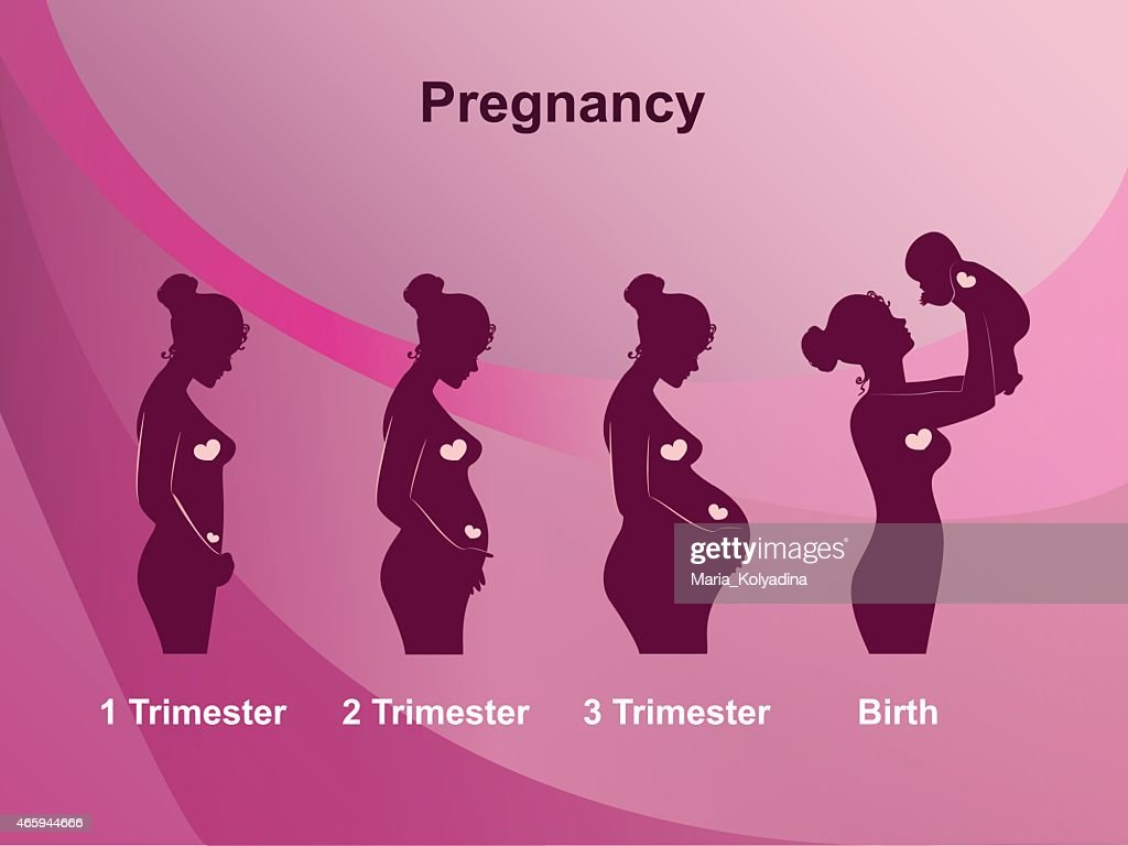 A pink infographic showing four stages of pregnancy