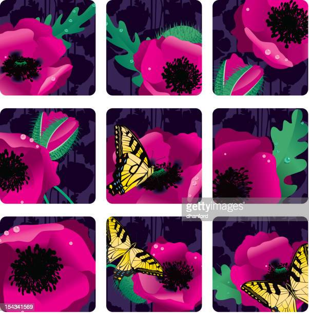 Pink Oriental Poppies at Night Squares or Icons