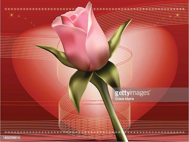 Pink rose background - VECTOR