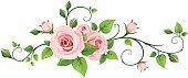 Pink rose vine. Vector illustration.