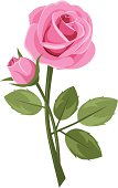 Pink rose with stem isolated on white. Vector illustration.