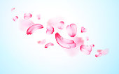 Pink sakura fresh falling petals with drops of water, dew with blur effect. Vector background. 3D realistic detailed romantic illustration