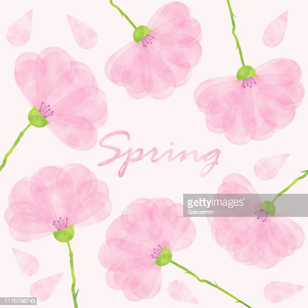 pink spring blossoms background. hand painted layered watercolor flowers clip art. watercolor floral pattern. design element for greeting cards and wedding, birthday and other holiday and summer invitation cards background. - ranunculus stock illustrations, clip art, cartoons, & icons