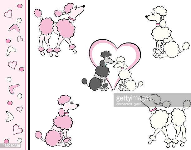 Pink, White Poodles, In Love
