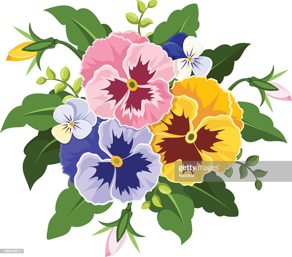 Pink, yellow and purple pansy flowers. Vector illustration.