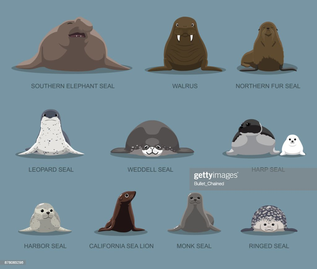 Pinniped Sitting Front Set Cartoon Vector Illustration
