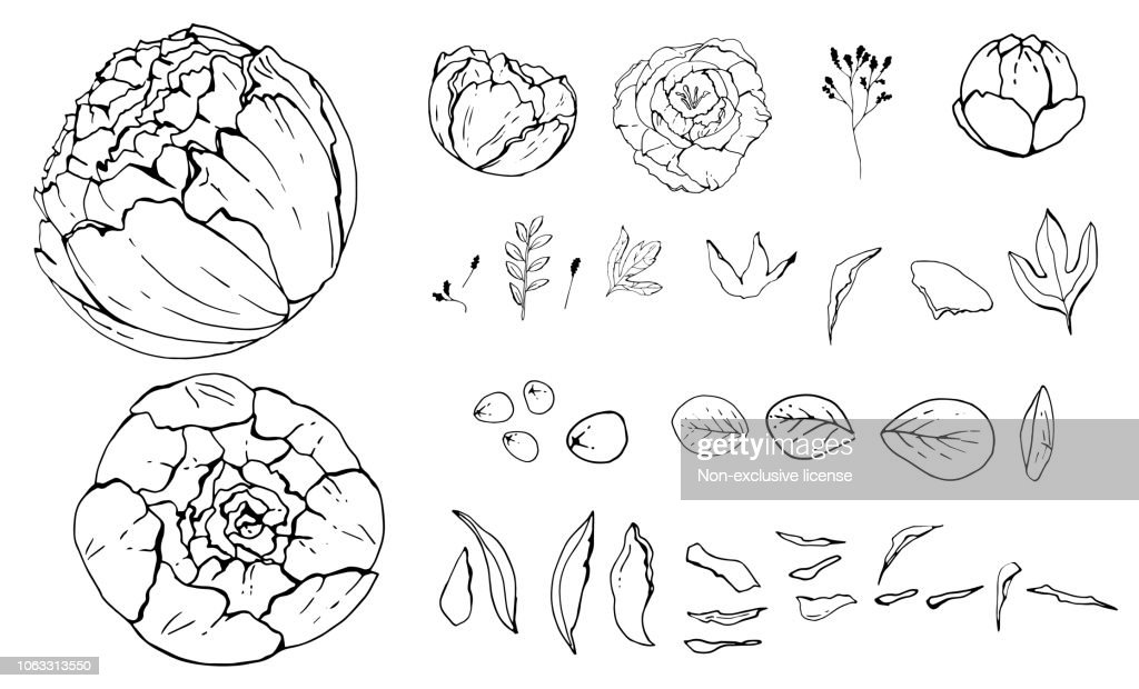 Pion flowers, Hand-drawn. objects isolated. Botanical drawings, Black and white with line art illustration.on white background, Vector illustration, sketch.