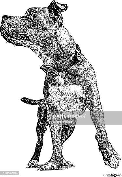 ilustraciones, imágenes clip art, dibujos animados e iconos de stock de pozo toro perro lleva corbata de moño - pit bull terrier