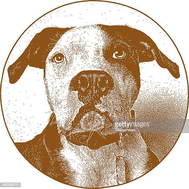 ilustraciones, imágenes clip art, dibujos animados e iconos de stock de pit bull retrato - pit bull terrier