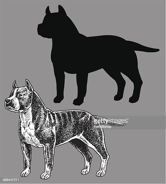ilustraciones, imágenes clip art, dibujos animados e iconos de stock de pit bull terrier perro de - pit bull terrier