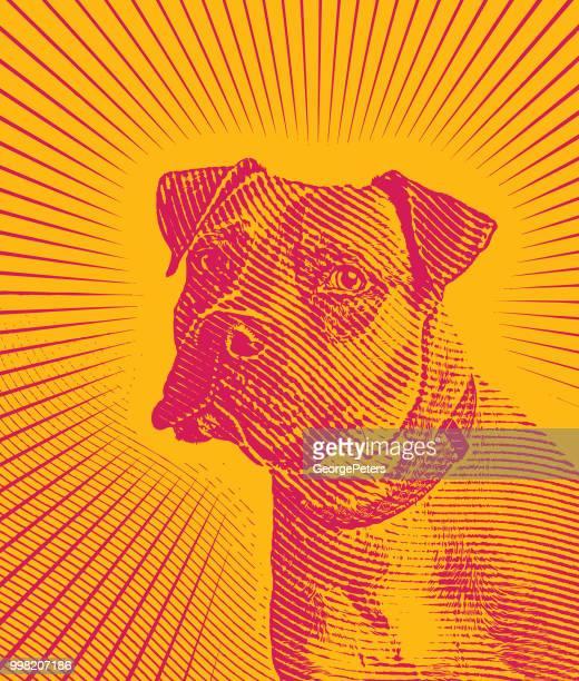 ilustraciones, imágenes clip art, dibujos animados e iconos de stock de retrato de pit bull terrier con el sol los rayos de fondo - pit bull terrier