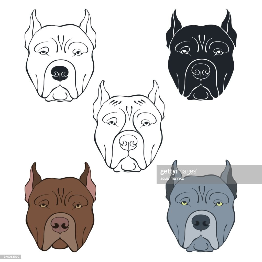 Pit Bull Terrier. Vector set of  dog's face. Hand-drawn vector illustration on a white background. Sketch, five isolated variants.