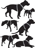 pit bull vector  silhouettes