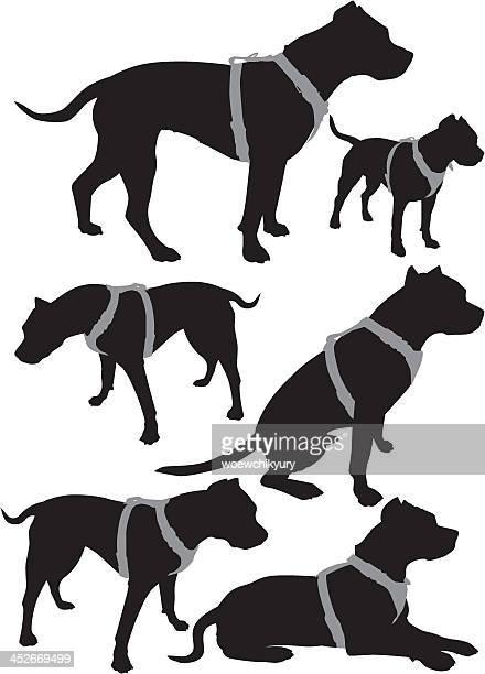 ilustraciones, imágenes clip art, dibujos animados e iconos de stock de pit bull vector siluetas - pit bull terrier