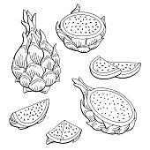 Pitaya dragon fruit graphic black white isolated sketch illustration vector