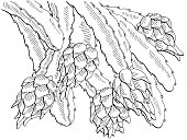 Pitaya dragon fruit graphic branch black white isolated sketch illustration vector