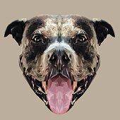 Pitbull dog low poly.