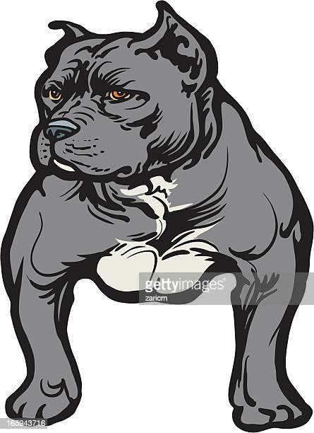 ilustraciones, imágenes clip art, dibujos animados e iconos de stock de pitbull - pit bull terrier