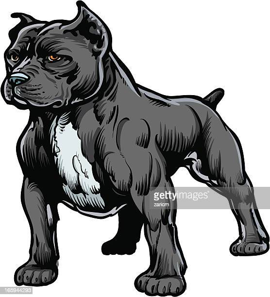 60 top pit bull terrier stock illustrations clip art - Dessin de pitbull ...
