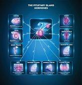 Pituitary gland hormones