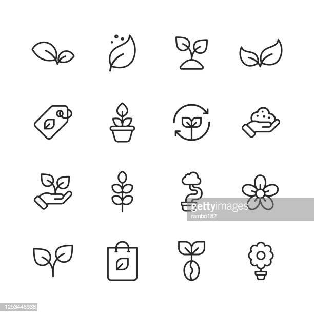 illustrazioni stock, clip art, cartoni animati e icone di tendenza di plant and seed line icons. editable stroke. pixel perfect. for mobile and web. contains such icons as plant, seed, leaf, tree, ecology, environment, agriculture, planting, growing, watering, recycling, fertilizer, soil, flower, gardening, flowerpot. - bocciolo