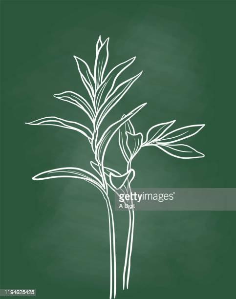 stockillustraties, clipart, cartoons en iconen met plant schoolbord - line art