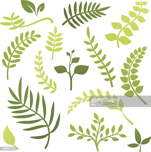 plant elements - vine stock illustrations