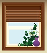 Plant in Window
