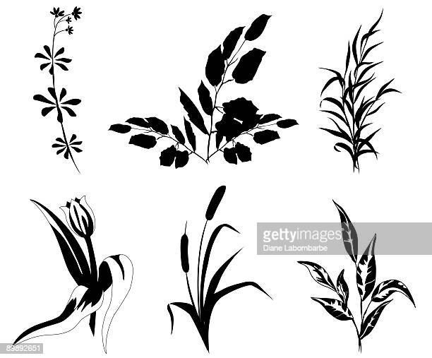 Plant Shapes assorted flowers and weeds black silhouettes