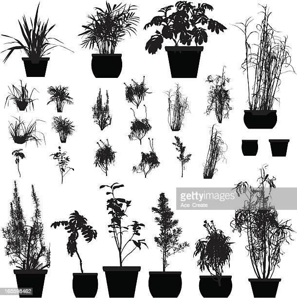 illustrations, cliparts, dessins animés et icônes de silhouette de collection - plante verte